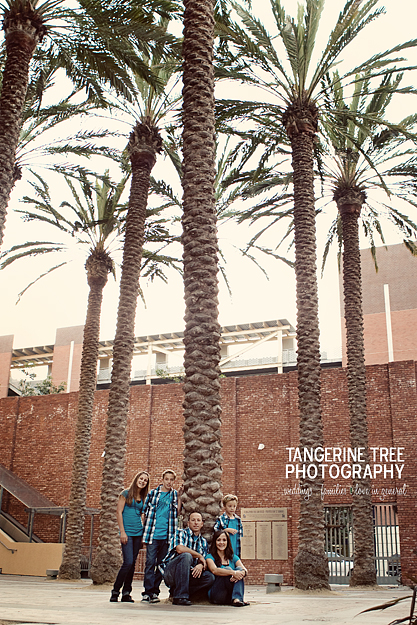 Tangerine tree photography san diego