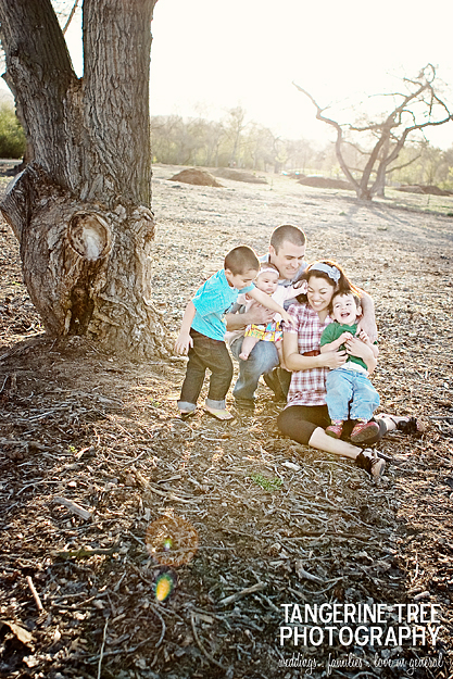 Tangerine tree photography family