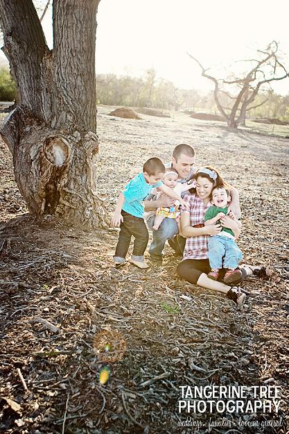 Tangerine tree photography family
